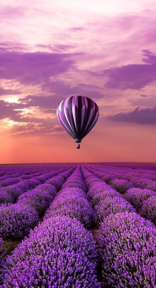 Hot Air Balloon over Lavender Field, France.. Take in the wonderful scent of the…My obsession with lavender will never end....