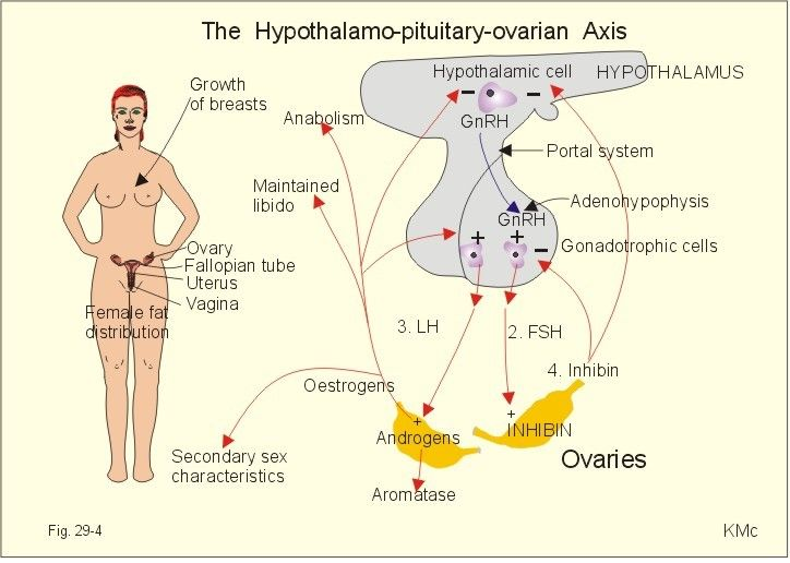 effects-of prolactin orgasm - Google Search