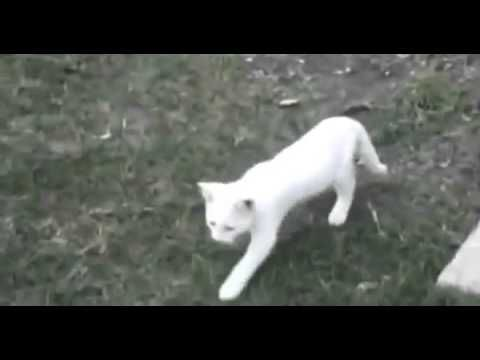 BEST Funny Videos 2014 Funny Cats Video Funny Cat Videos Ever Funny Animals Funny Fails 2014 - http://positivelifemagazine.com/best-funny-videos-2014-funny-cats-video-funny-cat-videos-ever-funny-animals-funny-fails-2014-3/ http://img.youtube.com/vi/xDhqJFYqwoY/0.jpg  Collectaion Funny animals video that shows a range of hilarious clips of animals doing crazy things,Funny Kids, Funny Animals Compilation. Judy Diet Programme ***Start your own website with USD3.9 per month***
