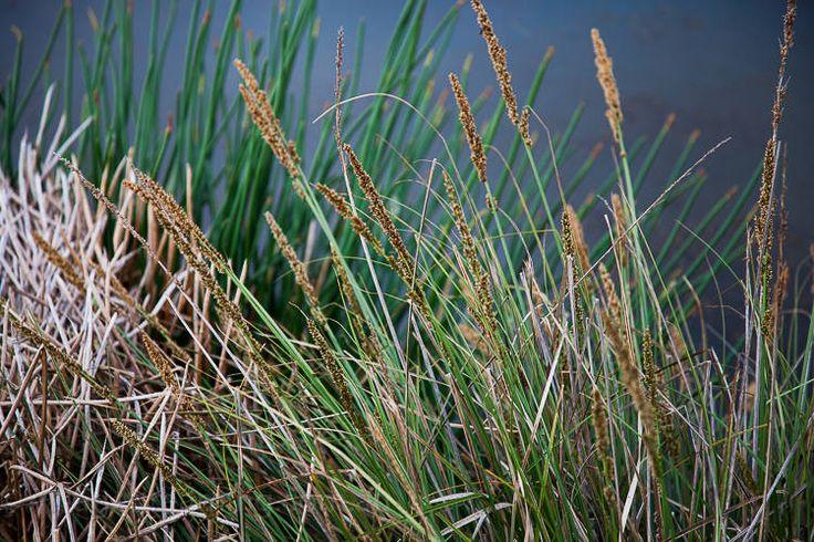 wetland detail (12 of 14)