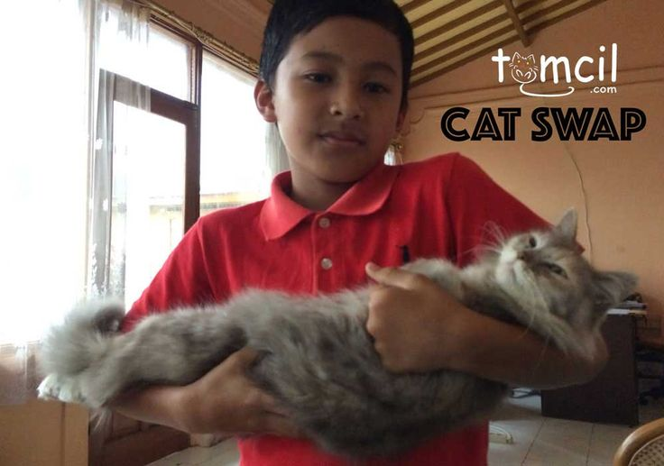 Cat Swap Chapter 1 | Storytelling for Children