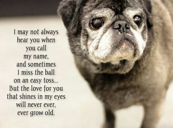 So sweet how our pets love for us only increases with age, they never stop loving us, and we should never stop loving them either