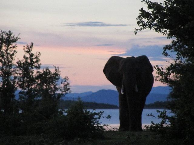 Elephant at dusk at Lake Kariba, Zimbabwe, Dec 2011.