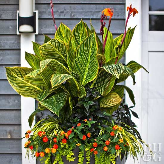 Tropical flowers transform your patio into a colorful outdoor living room with pots of flowering tropical plants. If you live in a tropical climate, you can grow exotic flowers in the ground, where many will become small trees or shrubs. Tropical flowers grow slightly smaller in pots.