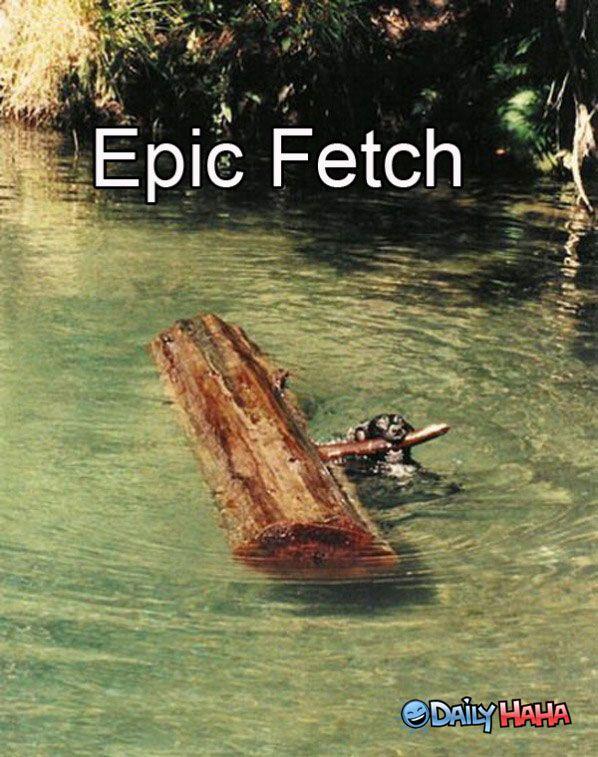 Epic fetch!