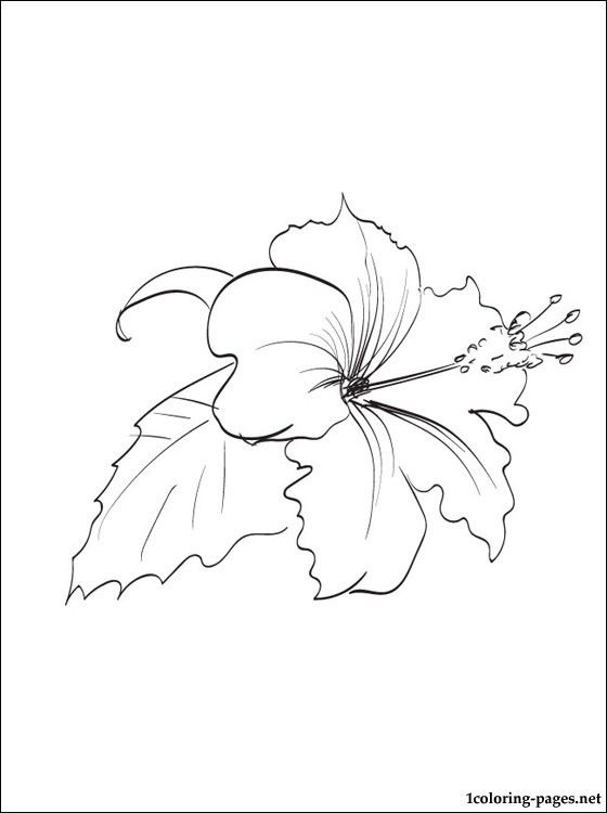 Hibiscus coloring page | Coloring pages