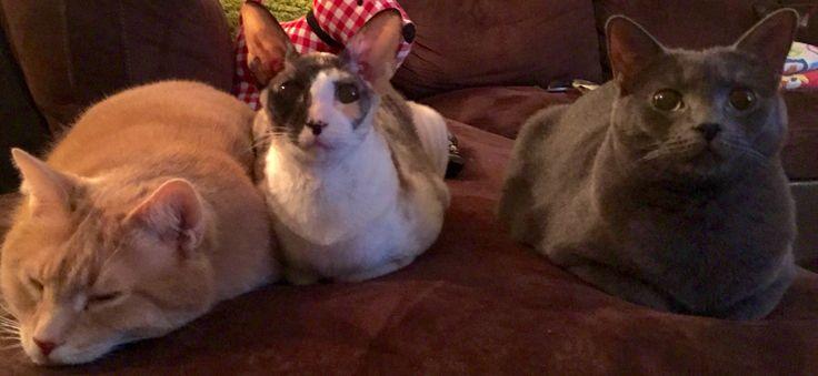Chouchou,Agnès and Lily cats