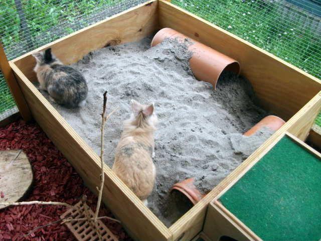 die besten 25 meerschweinchen spielzeug ideen auf pinterest hamster spielzeug ratte. Black Bedroom Furniture Sets. Home Design Ideas