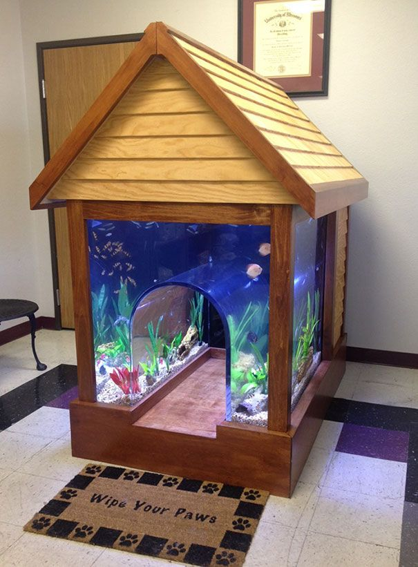In a vet's office: Fish Tank And Dog House