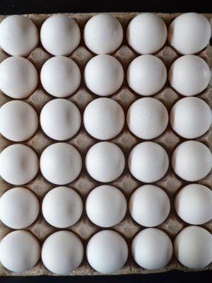Huevos de campo tamaño súper