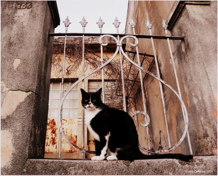 El felino y la reja - null