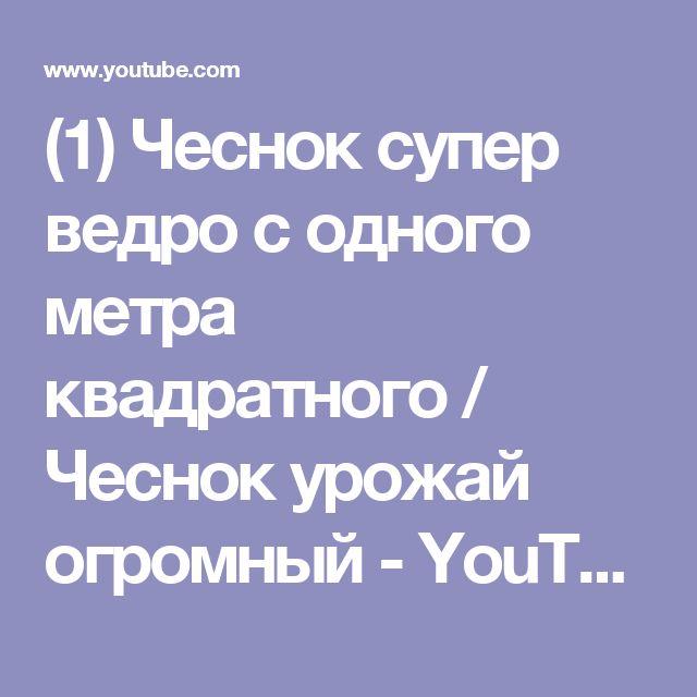 (1) Чеснок супер ведро с одного метра квадратного  / Чеснок урожай огромный - YouTube