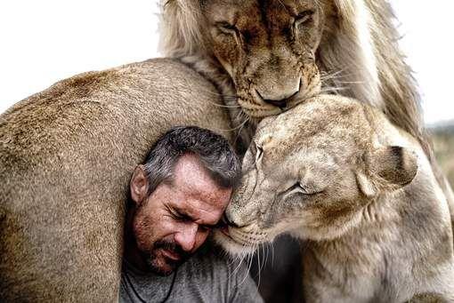 Fantastische foto's leggen wonderlijke band tussen man en leeuwen vast - HLN.be