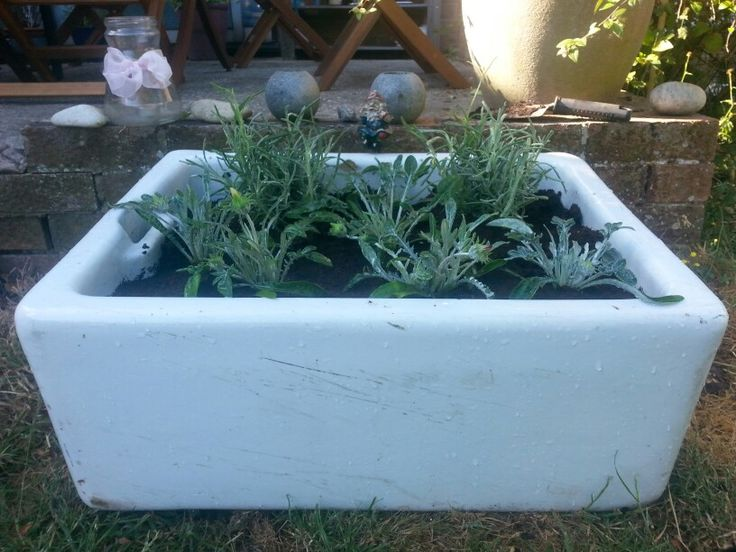 Vintage butlers sink planted with herbs - the start of my apothecary garden....
