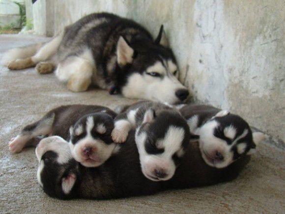 みんな可愛いの。子だくさんな犬のお母さんが自慢の我が子を披露した画像20選