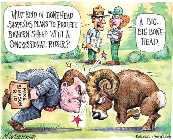 Boneheaded on bighorns - 13 of 13 - POLITICO.com