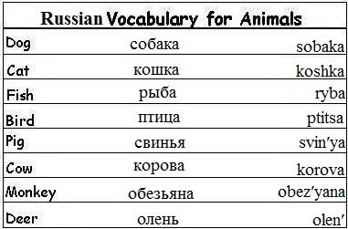 Animals in Russia Lesson for Kids | Study.com