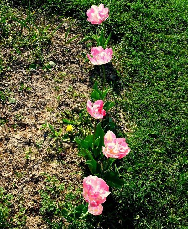 Une série à l'eau de rose  - Manuela M