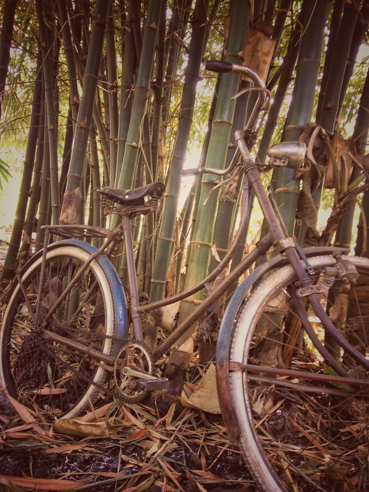 Phonegraphy The old bulls Vintage bicycle Taken by WahyuSriHastomo