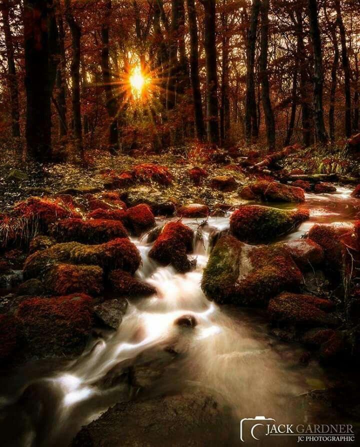 Shining Cliff Woods, Derbyshire by Jack Gardner