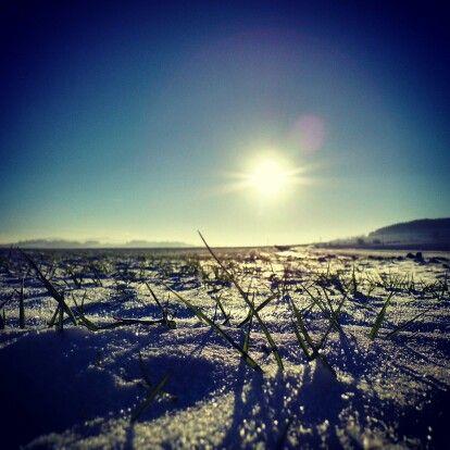#zima #2012 #zimno #polish #winter #cold #snow #snieg #field #pole #dolnośląskie #dolnyśląsk #polska #poland #sunny #slonecznie