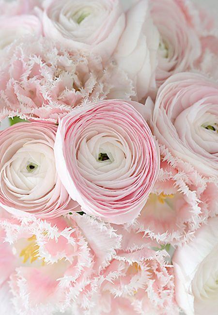ranunkeln und tulpen wunderschön-gemacht: frühlingsrosa-grau