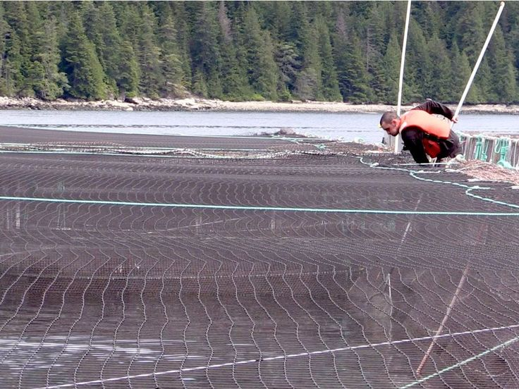 #Ocean-based salmon farms targeted in BC MP's private member's bill - Vancouver Sun: Vancouver Sun Ocean-based salmon farms targeted in BC…