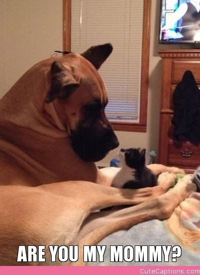 Are You My Mommy: Great Danes, Gentle Giant, Cat, Best Friends, Large Dogs, Scooby Snacks, Dogs Pictures, Kittens, Big Dogs