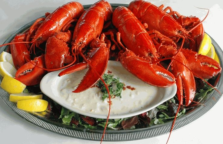 Four 1 1/4 lb. Lobsters