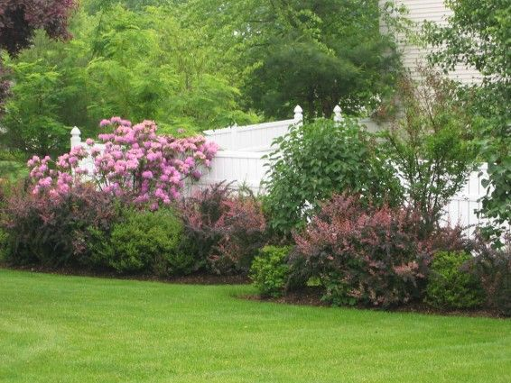 Evergreens for privacy maturing evergreens along for Flowering landscape plants