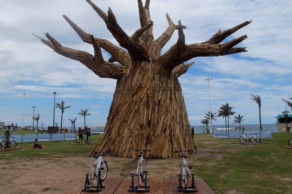 alternative-energy-to-light-up-the-baobab-tree-cop17-7.jpg (600×400)