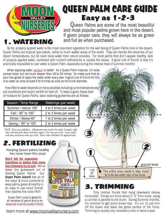 Queen Palm Tree Care