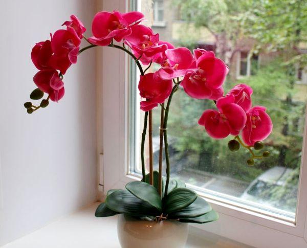 орхидея в горшке фото