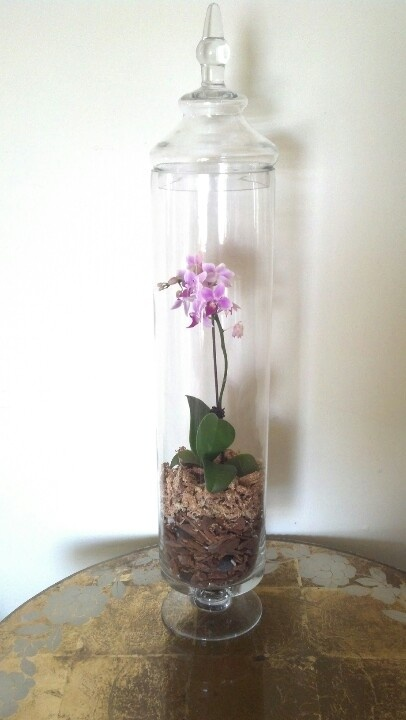 "Beautiful, one of a kind, handcrafted, 2'4"" high by 5"" diameter Phalaenopsis Orchid Terrarium! For sale, Richmond, VA, $75, cash only."