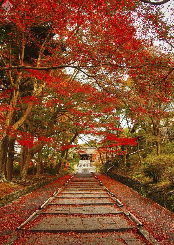 毘沙門堂。真紅に染められた紅葉並木の参道を抜けて。 #毘沙門堂 #kyoto #京都 #紅葉