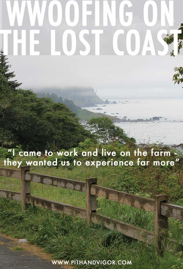 WWOOFing On the Lost Coast   Best of PITH + VIGOR Magazine