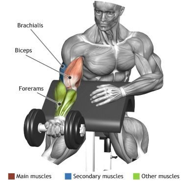 Proper form for one arm dumbbell preacher curl. This is a great exercise to focus on your biceps.