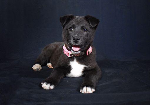 Chicago Il Labrador Retriever Meet Winnie A Pet For Adoption Pet Adoption Labrador Retriever Pets