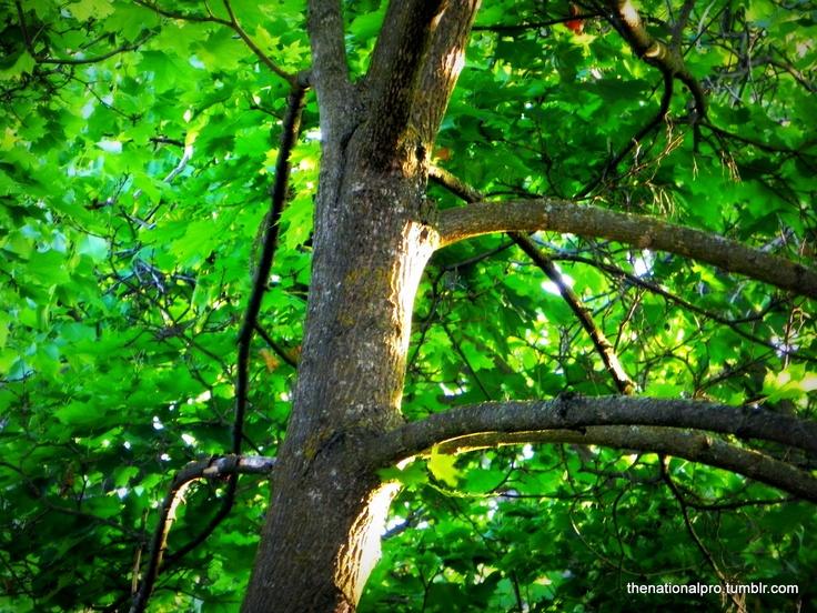 tree in my backyard, sunset shines on bark
