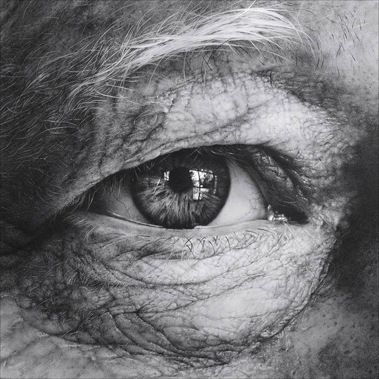 Amazing Drawings: The Iris, Irises And Illusions