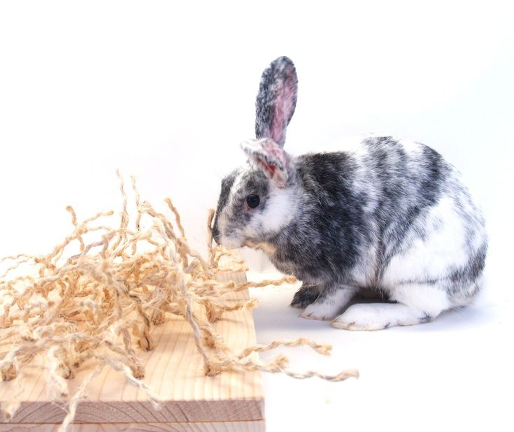 Dog Chewing On Rugs: 1000+ Ideas About Rabbit Toys On Pinterest