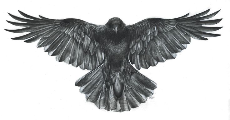 Crow by heavenhel.deviantart.com on @DeviantArt