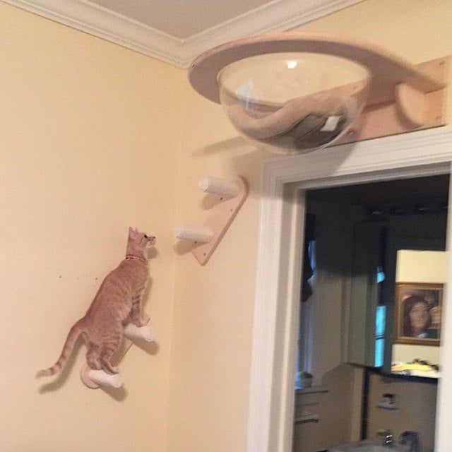 Ceiling Complex For Cats Cat Wall Furniture Cat Room Diy Cat Tree