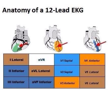 Anatomy of 12-Lead EKG