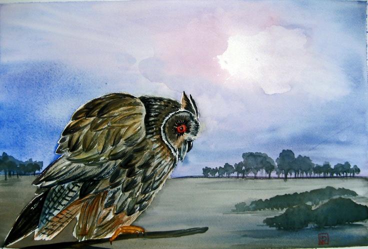 Il gufo - acquerello 35x51 di Lorenza Pasquali