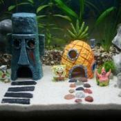 Maison Bob l'éponge pour aquarium - Pour la maison - amazon.com