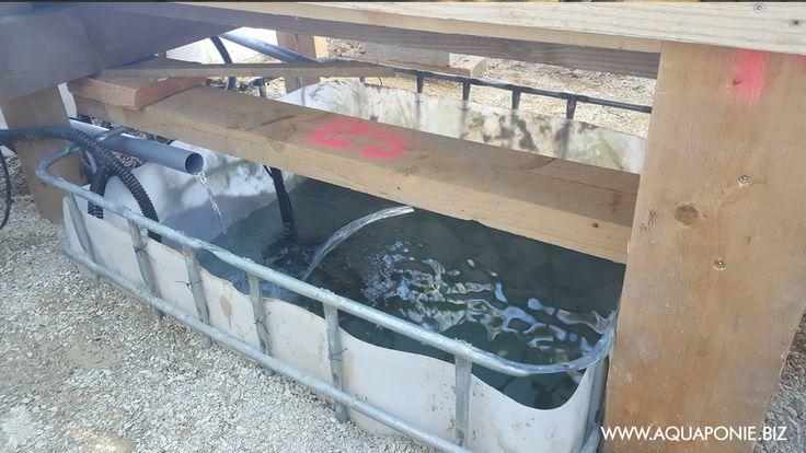 Salut les aquaponistes!  Aujourd'hui on fait un petit tour en Belgique, chez Julien B. un bon copain de l'aquaponie. Julien a découvert l'aquaponie il y a peu et il n'a pas chômé comme nous pouvons le voir avec sa superbe serre aquaponique créée à partir de matériaux de récupération. Dans cette serre enterrée, Julien …
