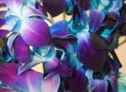 Color Me Purple
