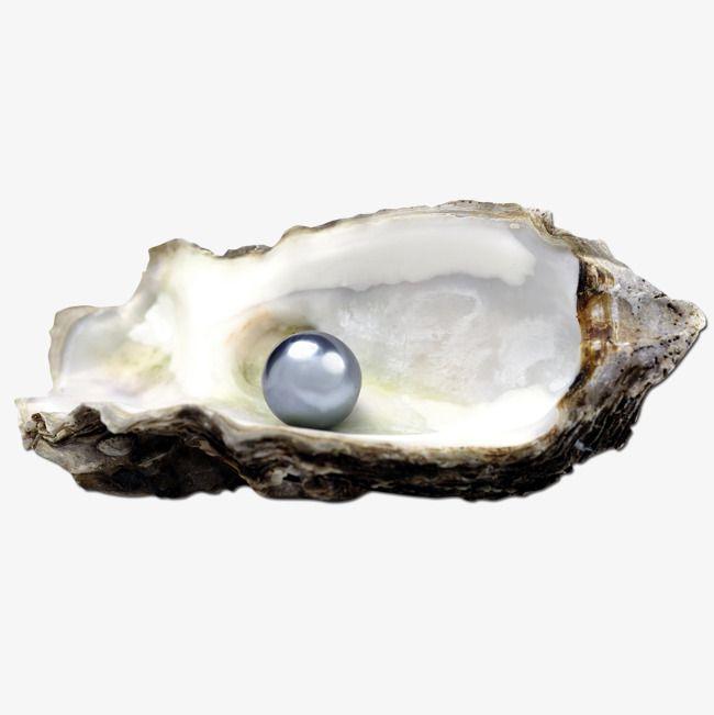 اللؤلؤ و المحار Rings For Men Pearls Jewelry