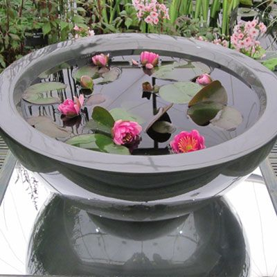 60cm fibreglass container in Gunmetal planted with Perrys Baby Red waterlilies for a sunny position